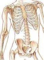 Комплекс для укрепления связок и костной ткани