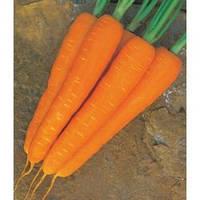 Семена моркови Стромболи F1, Clause (Франция), упаковка 100 000 семян