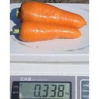 Семена моркови Болтекс, Clause (Франция), упаковка 0,5 кг