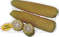 Кукуруза сахарная Добриня F1 2500сем.