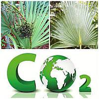 Экстракт пальмы сабаль (Со2) 5гр