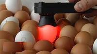 Овоскоп для просвечивания яиц Сяйво ОВ1-60-Д