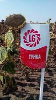 семена подсолнечника Тунка (2017р), фото 1
