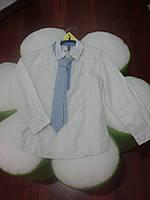 Школьная форма рубашка рубашка с галстуком мал. рубашка бежева, галстук в полоску бело-синюю 100%хлопок 130315