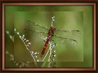 """Набор Crystal Art """"Полёт стрекозы"""" для изготовления картины своими руками"""