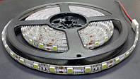 Светодиодная лента SMD 5050 (60 LED/m) IP68 Premium