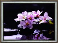 """Набор Crystal Art """"Отражение красоты"""" для изготовления картины своими руками"""