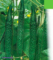 Семена огурцов сорт Гектор, пакет 10х15 см