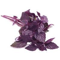 Семена Базилик Фиолетовый,пакет 10х15 см