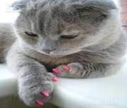 *Накладные коготки для кошек, XS, салатовый(неон)/силиконовые накладки на когти+инструкция
