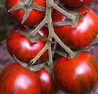 ТАЙГЕР F1 - семена томата индетерминантного, 100 семян, Yuksel Seeds, фото 1