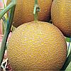 ГЕДИЗ F1 - семена дыни, 1 000 семян, Yuksel Seeds