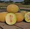 РАДМИЛА F1 (Медетли) - семена дыни, 1 000 семян, Yuksel Seeds