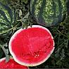 БИАНТ F1 (Эркен F1) - семена арбуза, 1 000 семян, Yuksel Seeds