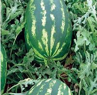 ДЕМРЕ F1 - семена арбуза, 1 000 семян, Yuksel Seeds