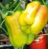 ДЕНИЗ F1 - семена перца сладкого, 500 семян, Yuksel Seeds