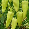 ЭЛМАС F1 - семена перца сладкого, 500 семян, Yuksel Seeds