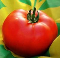 АНТАЛІЯ F1 - насіння томату індетермінантного, 500 насіння, Yuksel Seeds, фото 1