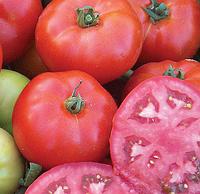 МАРМАРА F1 - семена томата детерминантного, 1 000 семян, Yuksel Seeds