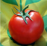 НЕМЕСИС F1 - семена томата индетерминантого, 100 семян, Yuksel Seeds