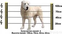 Электропастух для собак и котов (комплект)