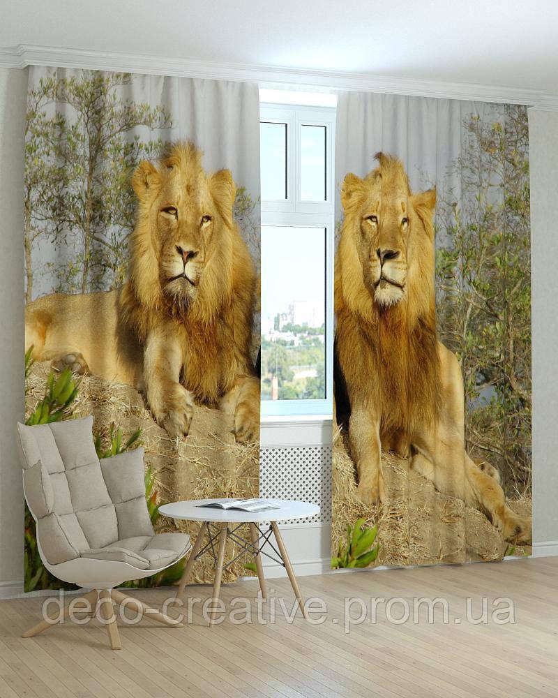 Фотошторы львы