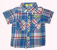 Рубашка для мальчиков оптом,  S&D, 2 -10  рр., арт.SG-14, фото 1