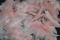 Перья цветные нежно розовые (размер упаковки 20Х11 см) 30/25 (цена за 1 шт.+5 грн)