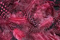 Перья цветные (размер упаковки 20х11 см) 25/20 (цена за 1 шт. + 5 гр.)