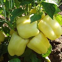 Семена перца Никита F1, Clause 5 грамм