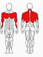 Тренажер блок для мышц спины (комбинированный) Sport Fit (1217), фото 2