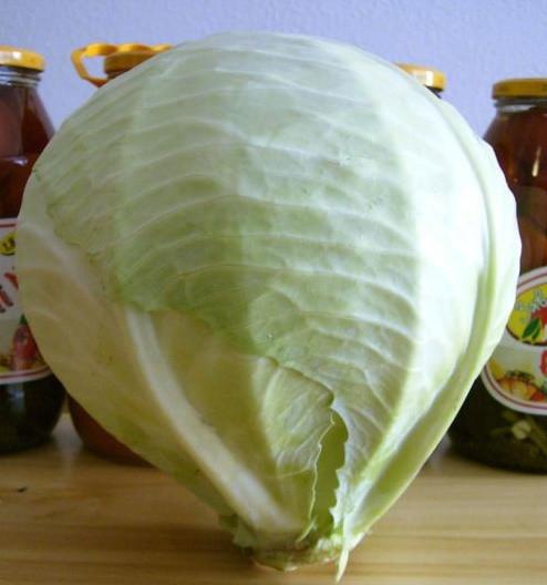 МАНДАРИН F1 - семена капусты белокочанной, CLAUSE