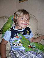 Китайский попугай или чинский попугай. Малыши Докормыши.