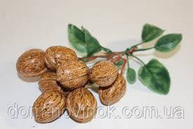 Орехи на ветке.