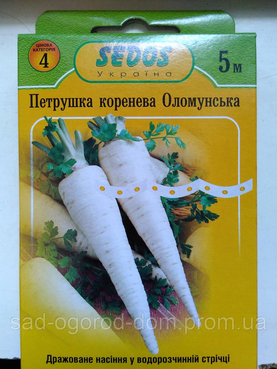 Петрушка корневая Оломунская 5 метров