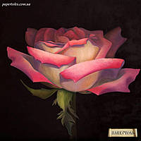 """Набор """"Роза на рассвете"""""""