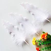 Гусиное перо витое. Цвет белый. Размер около 15см*1шт
