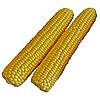 РАННЯ НАСОЛОДА F1 - насіння кукурудзи суперсолодкої, 2 500 насіння, Lark Seed