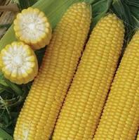 ЭКСЕЛЕНТ F1 - семена кукурузы суперсладкой, 2 500 семян, Lark Seed