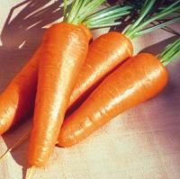 РЕД КОРЕД - семена моркови, 500 грамм, Lark Seed