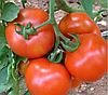ГРАНДО F1 - семена томата детерминантного, 5 000 семян, Lark Seed