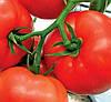 МОБИЛ - семена томата детерминантного, 250 грамм, Lark Seed