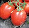 РИО ГРАНДЕ - семена томата детерминантного, 500 семян, Lark Seed