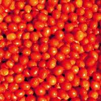 ФРЕНЗИ F1 - семена томата детерминантного, 1 000 семян, Lark Seed, фото 1