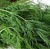 ОЛИВЕР - семена укропа, 100 грамм, Moravoseed