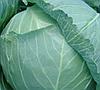 ГЕЛИОС F1 - семена капусты белокочанной, 2 500 семян, Moravoseed