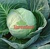КАЛИБРО F1 - семена капусты белокочанной, 2 500 семян, Moravoseed