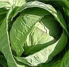 СТАРТ F1 - семена капусты белокочанной, 2 500 семян, Moravoseed