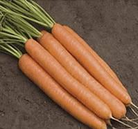 БЕРЛИКА F1 - семена моркови, 50 000 семян, Moravoseed, фото 1