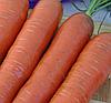 КОРТИНА F1 - семена моркови, 50 000 семян, Moravoseed